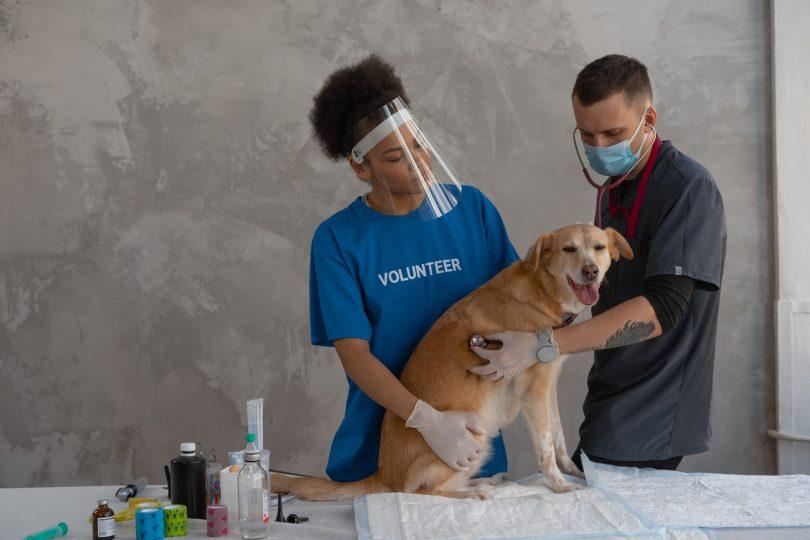 frais vétérinaire remboursement